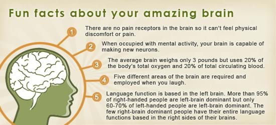 fun facts about brain essay Fun facts about perception and how we see the world if brain space indicates the importance of a sense, then vision is the most important.