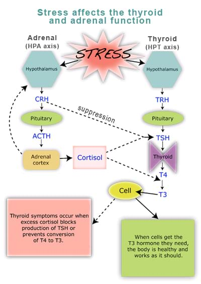 stress and thyroid trouble Testing for thyroid disease if our body is overloaded with stress (mental, physical, environmental), and/or the medicine we take for certain health issues.